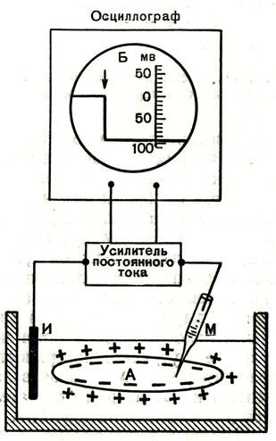 микроэлектрода (схема): М