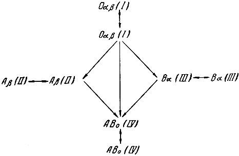 Рис. 7. Схема групповой совместимости при переливании крови.