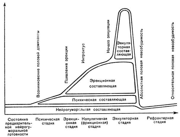 Цикл сексуального взаимодействия