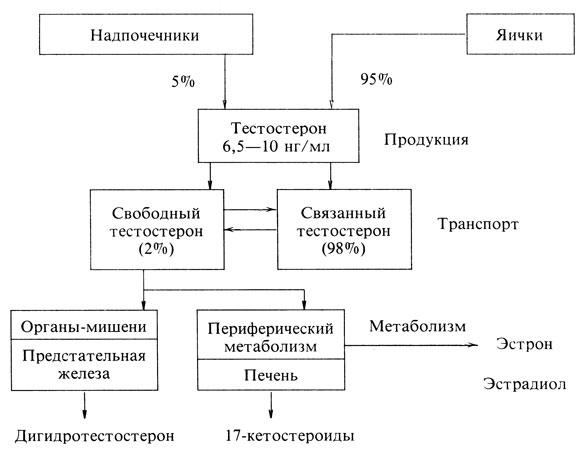 Схема. Распределение