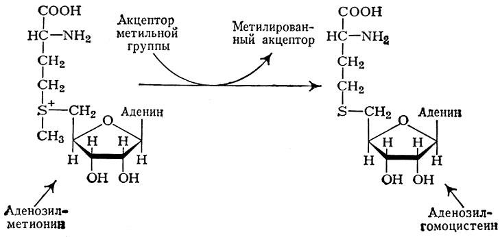 Схема процесса метилирования