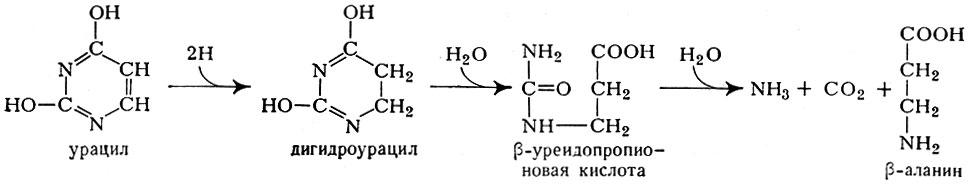 Схема распада (деградации)
