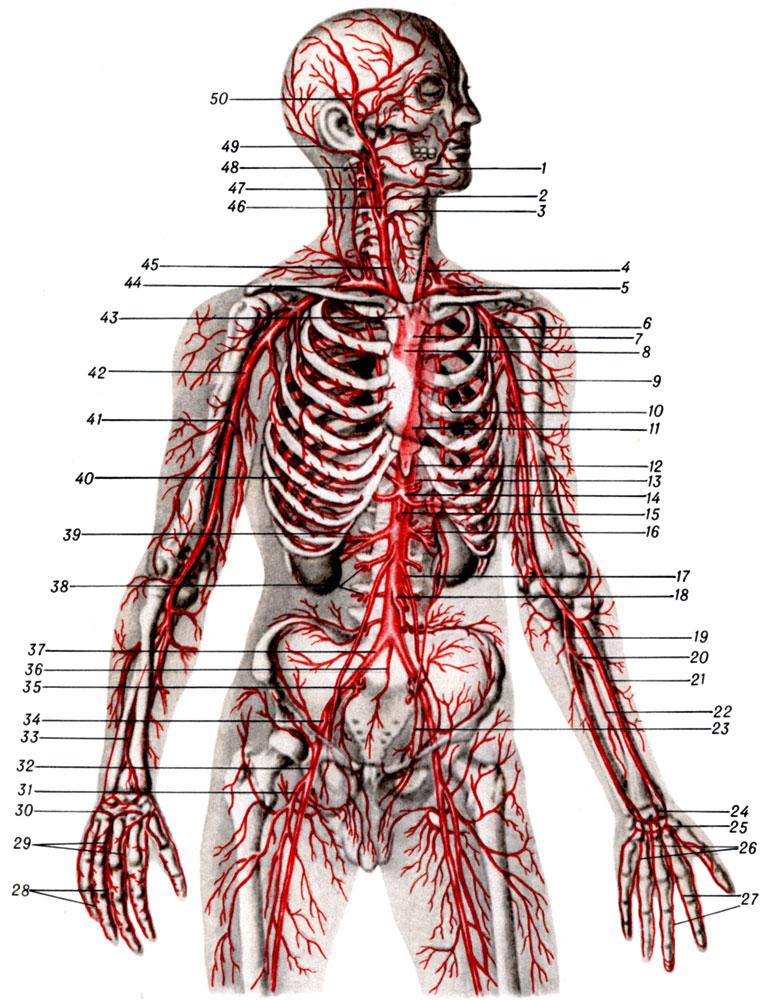 упражнения для укрепления локтевых суставов